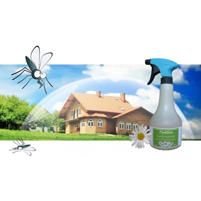 Pyrethre, barrière insecticide naturelle protège ma maison